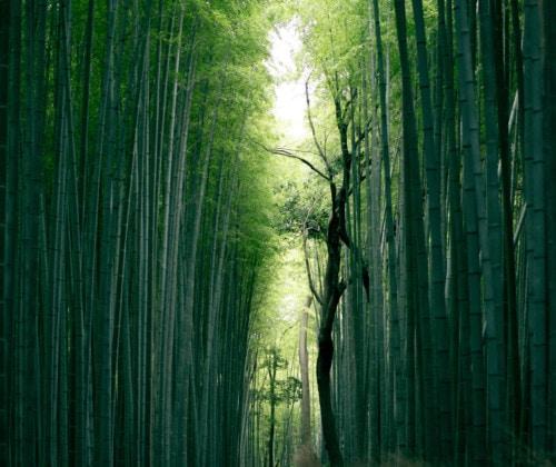 7 Dinge über Bambus - Headbild