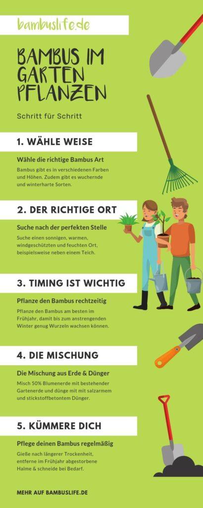 Infografik: Bambus im Garten einpflanzen - Schritt für Schritt