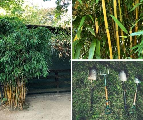 Bambus im Garten anpflanzen - headbild