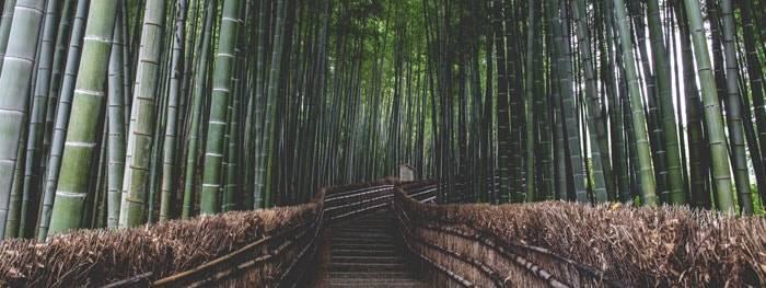 Bambuswald mit mittigem Weg