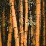 Brauner Bambus im Garten