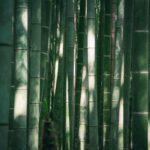 Grüner Bambus im Garten