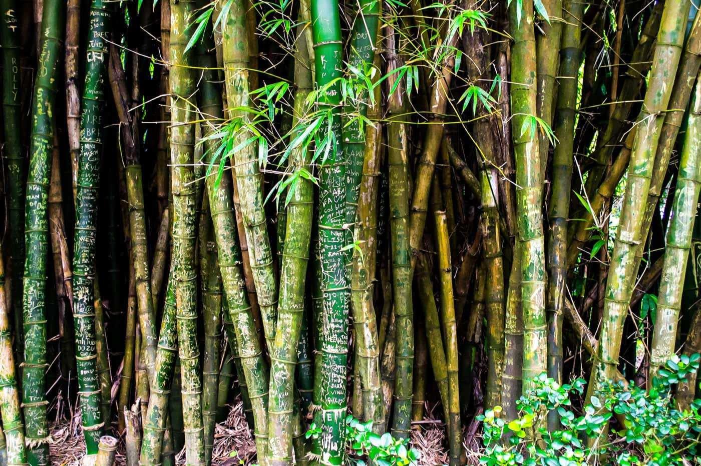 Bambus ist das Material der Zukunft - Headbild