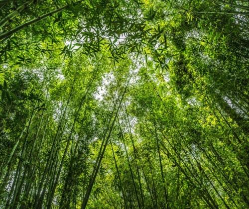 Bambus ist der nachhaltige Rohstoff der Zukunft - Headbild