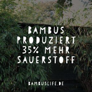 Bambus produziert 35% mehr Sauerstoff als herkömmliche Bäume